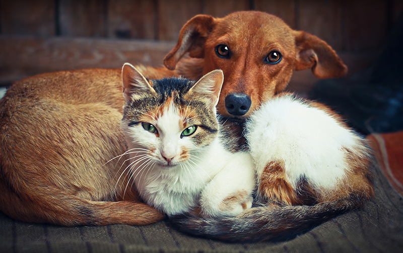 Besties! Dogs and cats make the best animal companions!